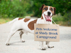 your well behaved pet is welcome at shady brook campground in pa